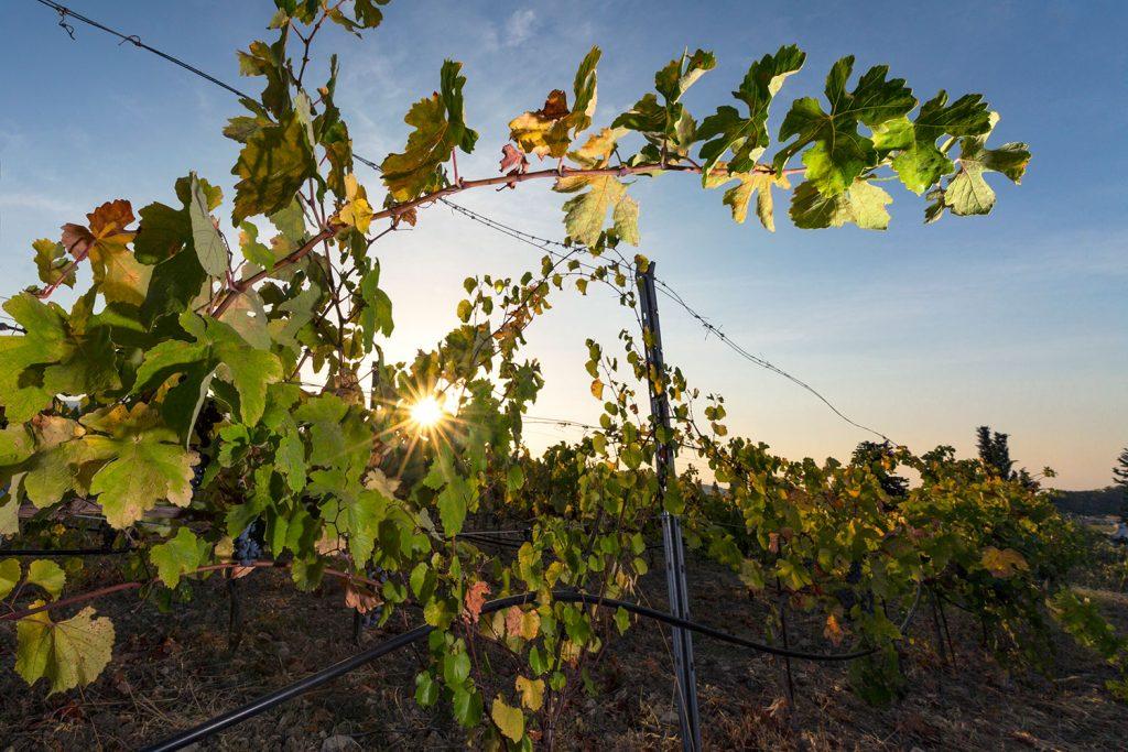 ampelones-vakakis-wines-samos-02