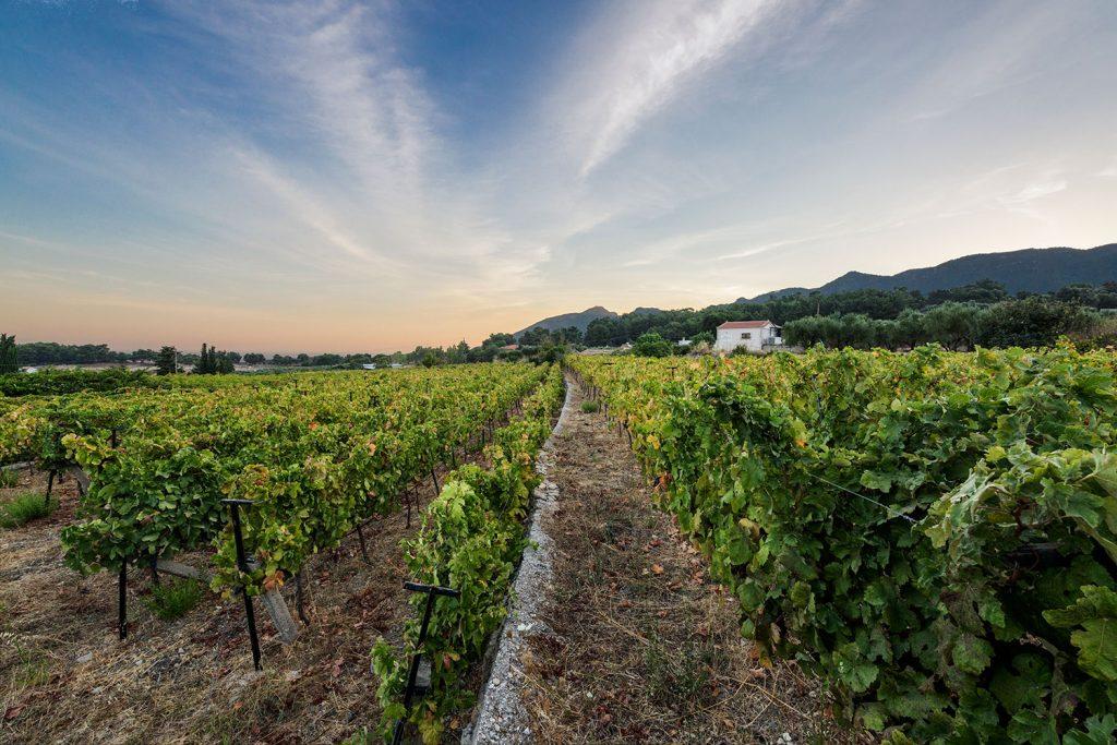 ampelones-vakakis-wines-samos-03
